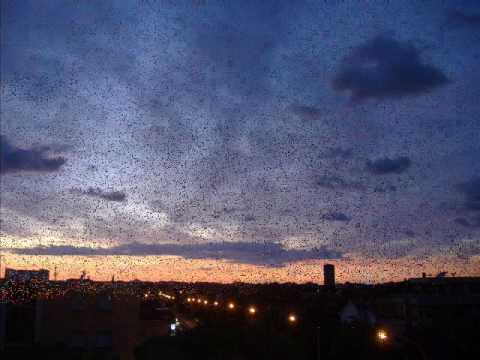 Gosford Park - Waltz of my heart