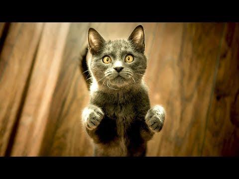 5 Dinge, die deine Katze von dir erwartet!