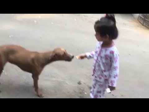 Baby Feeding Dog - This is so cute !!