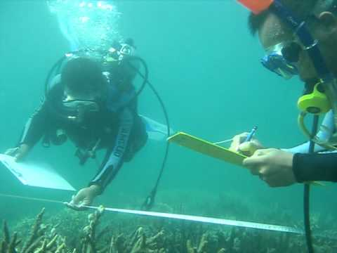 Line Intercept Transect for Corals and Reef Fishes Identification.AVI