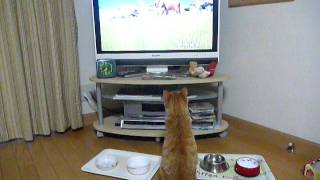 My lovely cat Jun likes watching television. Jun watches eagerly an...