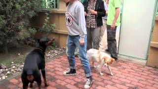 China Dog Training - Proper Discipline.mov