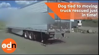 Dog tied to moving truck rescued just in time!