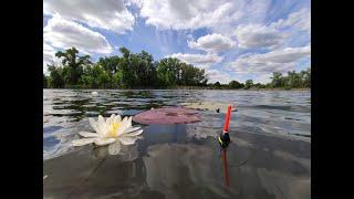 Рыбалка на утренней зорьке Карась и линь на поплавок Поклевки крупным планом