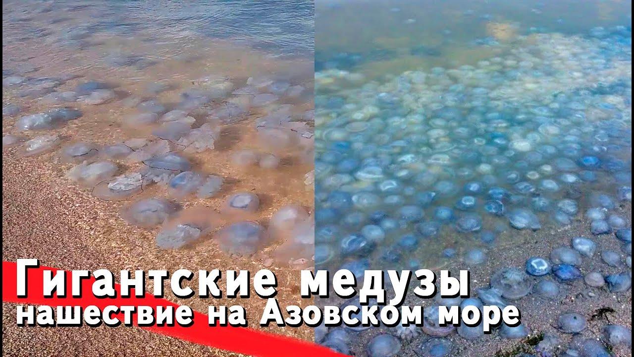ЭТО УЖЕ ПОЛНЫЙ П**ЕЦ! Пляжи Азовского моря засыпали сотни тысяч мертвых медуз. Нашествие медуз 2021