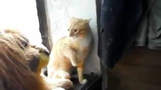 Котик против Льва! Видео прикол 2016, новое, ютуб| Cat vs Lion(Котик против Льва! Видео прикол 2016, новое, ютуб| Cat vs Lion Этот ролик обработан в Видеоредакторе YouTube (http://www.youtube..., 2016-05-17T20:59:45.000Z)