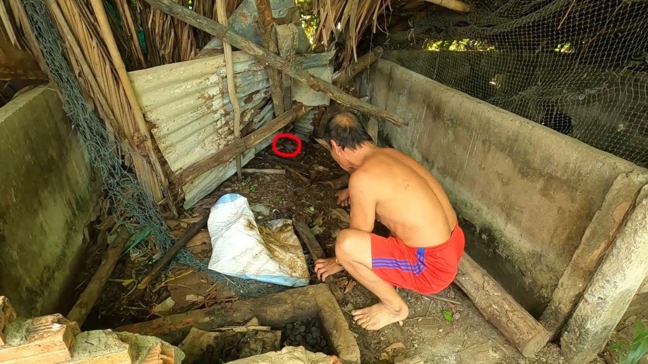Phăng Theo Dấu Vết Từ Ông Chủ Nhà Yến Rắn Độc Cắn Chết Con Chuột Lột Da Dưới Nền Chuồng Heo