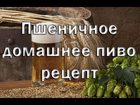 Рецепт приготовления пшеничного пива в домашних условиях Видео 18+