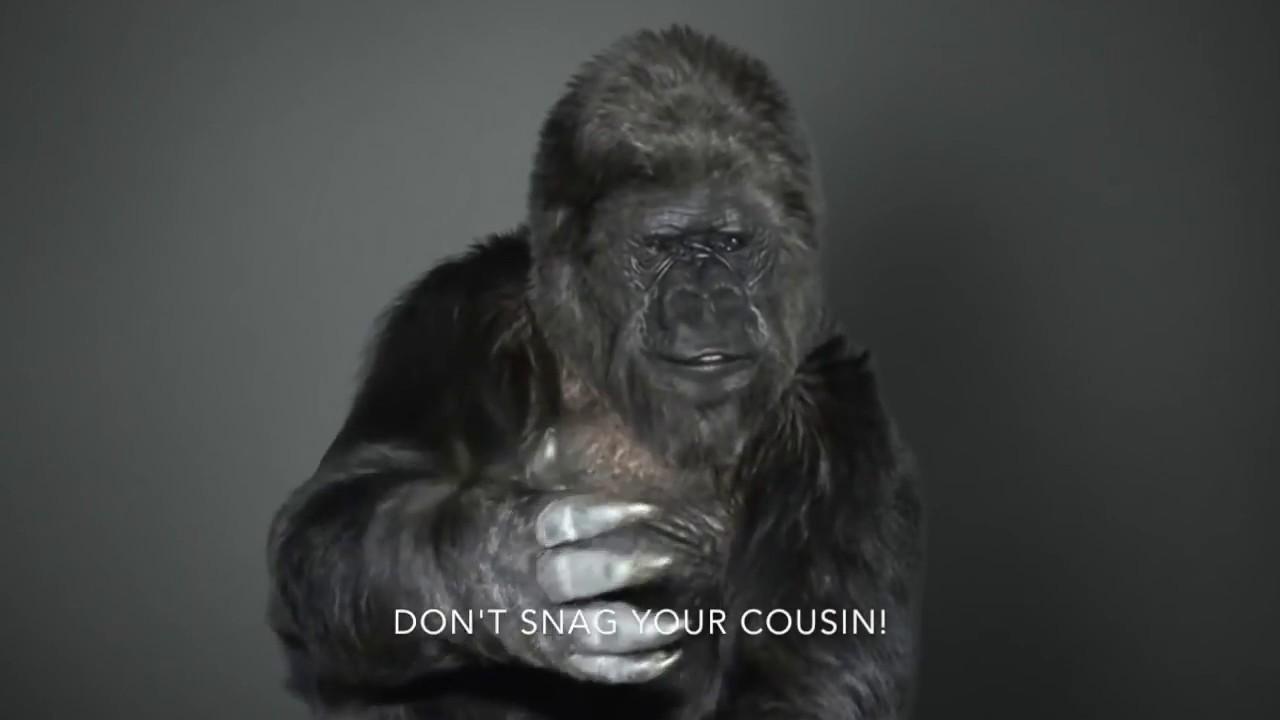Apes and Human Language - Eugraph