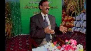 Farba Janwer extremely useful tips Dr.Ashraf Sahibzada