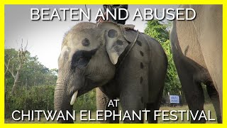 Happening Now: Elephants Abused for Festival