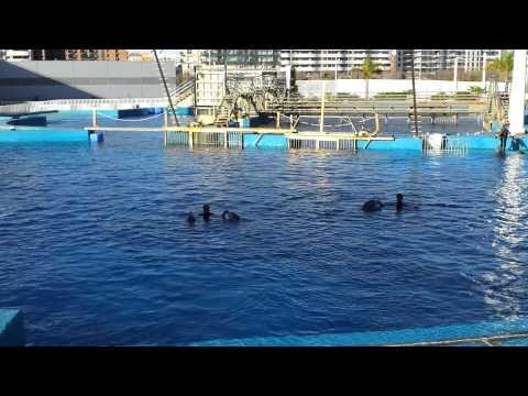 Dolphin Show (Oceanographic, Valencia)