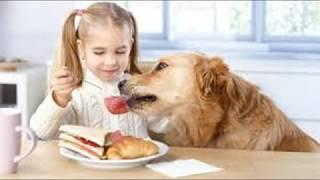 13 ошибок , которые совершают все владельцы домашних животных!