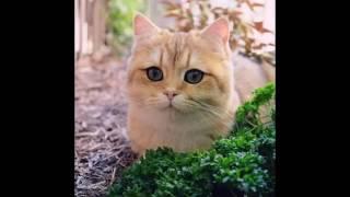 Самые милые и смешные фото животных топовая подборка фота The most cute and funny animal photos