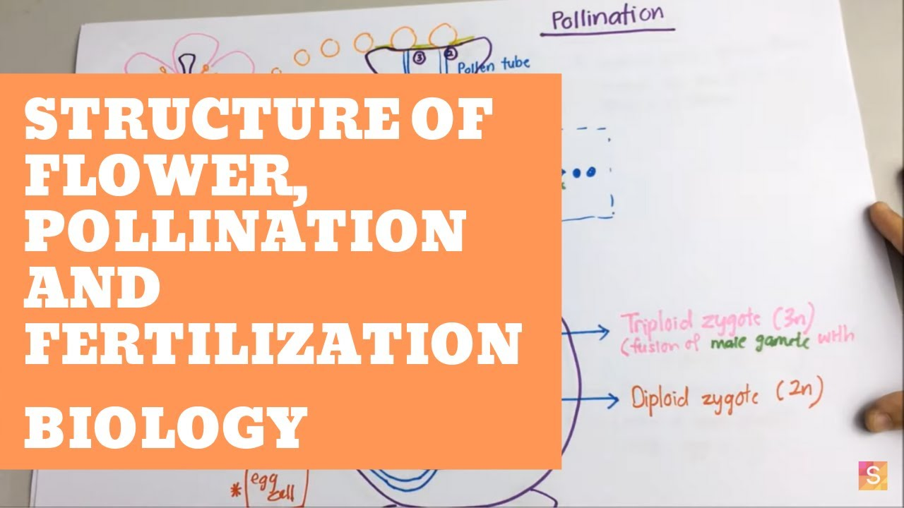 hight resolution of biology structure of flower pollination and fertilization