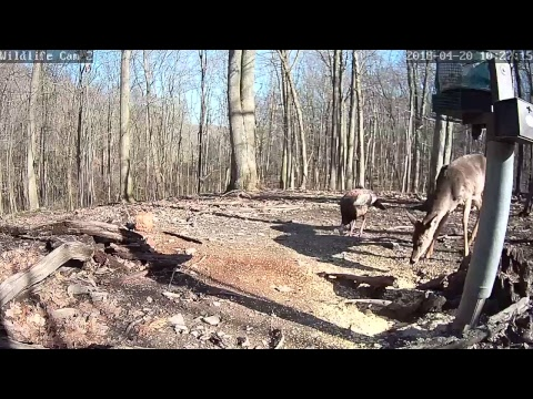 Live Deer & Wildlife Webcam 2