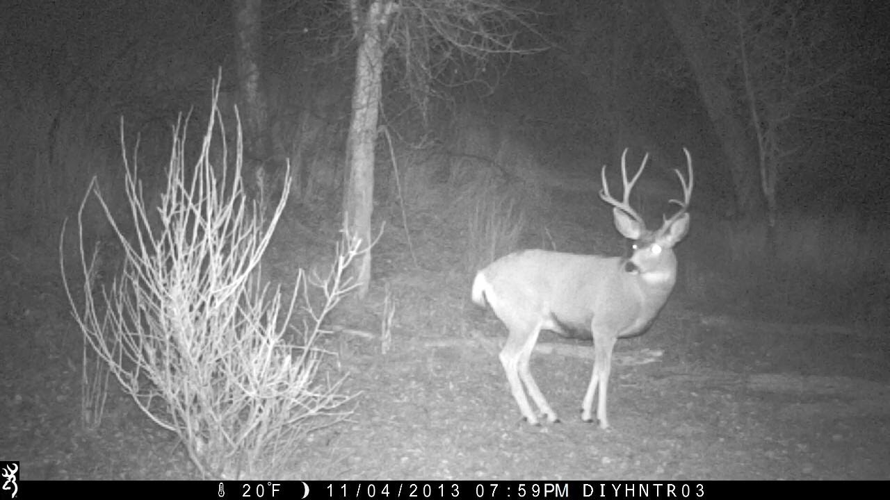 Mule Deer with Boken G2 Antler on Different Browning Trail Cameras