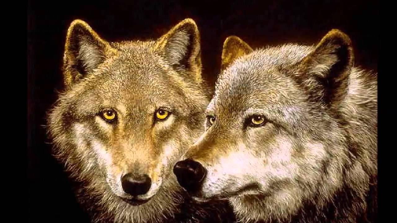 native american lobos wolves  Indian music Sacred Spirit