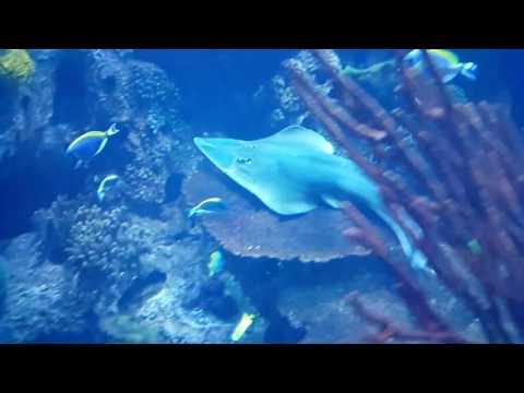 Burj Al Arab Hotel Aquarium in Dubai 09.11.2016
