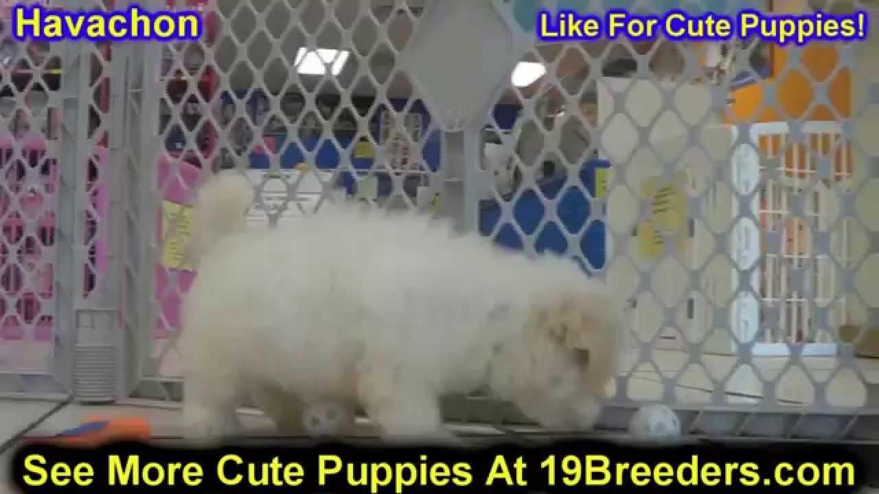 Dogs Puppies Sale Kijiji Chicago Il