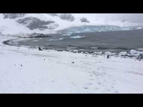 Cuverville Island - Seal and Penguins