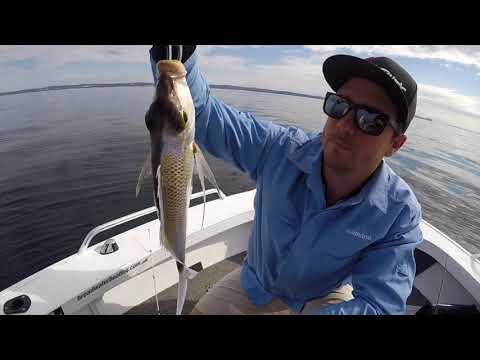 Long Reef Kingfish Winter 2018 Sydney Fishing