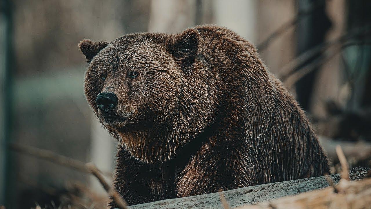10 Самых АГРЕССИВНЫХ Животных На Планете, Вы Должны Это Видеть