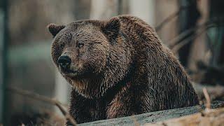 10 Самых Агрессивных Животных в Мире, Вы ОБЯЗАНЫ Это Увидеть!