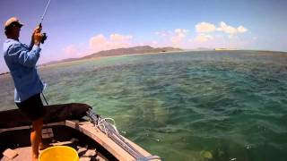 Coral trout fishing on shallow bommies