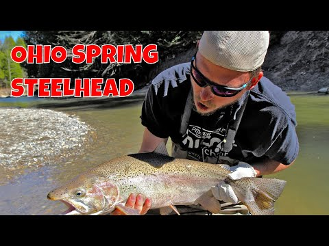 Ohio Spring Steelhead Fishing
