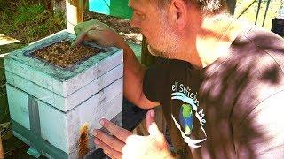 What Does Native Bee Honey Taste Like?