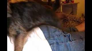Dog + My BF