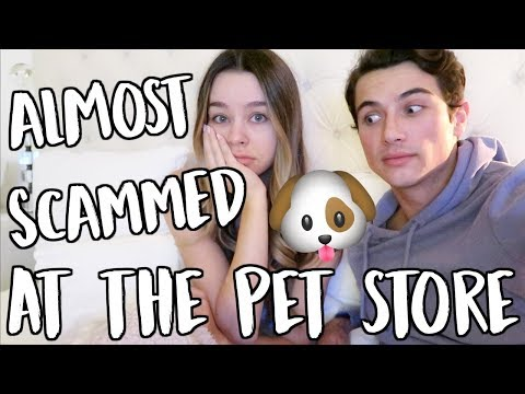 Download Youtube: ALMOST SCAMMED AT THE PET STORE! VLOGMAS DAY 13!