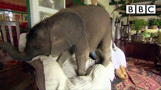 Baby elephant causes havoc at home - Nature's Miracle Orphans: Series 2 Episode 1 Preview - BBC One