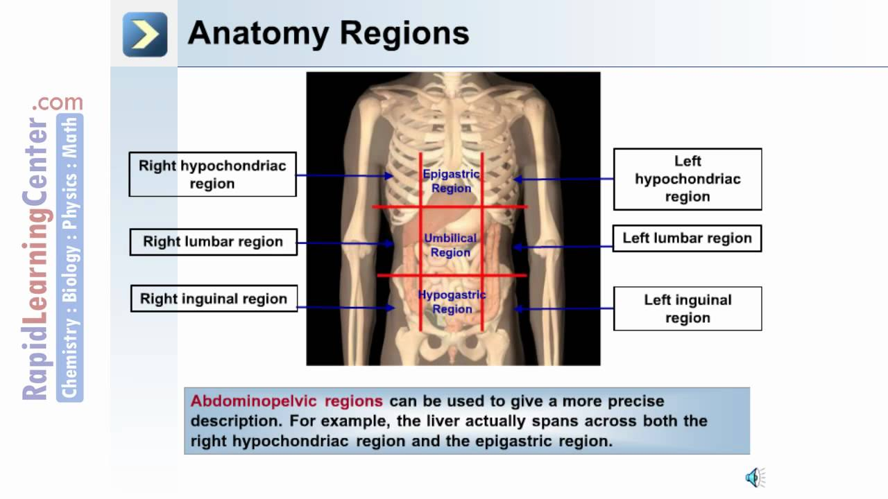 Intro to the Human Body - Anatomical Terms - YouTube