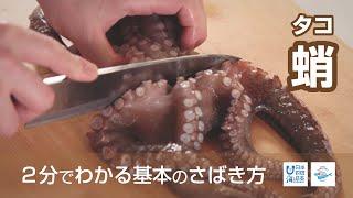 蛸(たこ)のさばき方 - How to filet Octopus -|日本さばけるプロジェクト