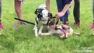 Agility en education canine positive proche d'Angers