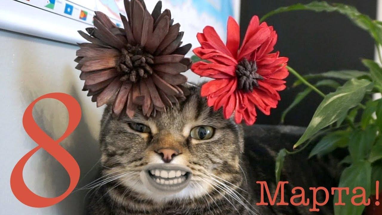 Выздоравливай, картинка с 8 марта с кошкой
