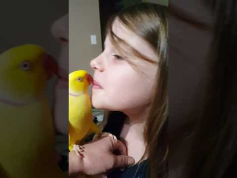 El adorable periquito que habla y da besos de buenas noches a esta niña