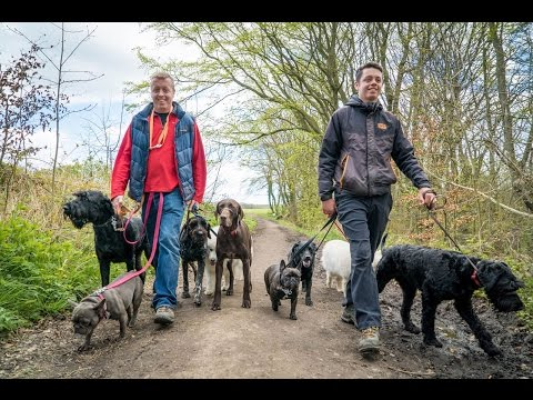 How to find a great dog walker?