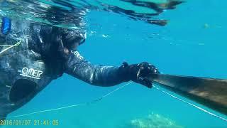zıpkınla balık avı (TRAL)