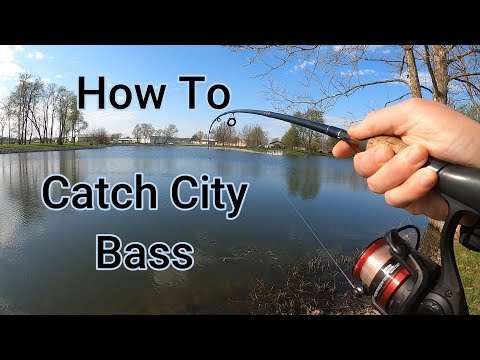 How To Catch Fish At Your City Park Lake.