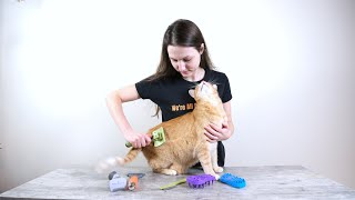Top 7 Best Cat Brushes (We Tested Them All)