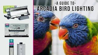 18-inch 15 Watt Arcadia FB15 Bird Lamp