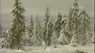 Проклятье Архангельского леса