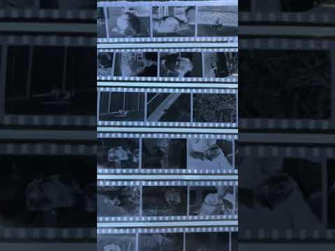 Kodak Tri X 35mm Developed