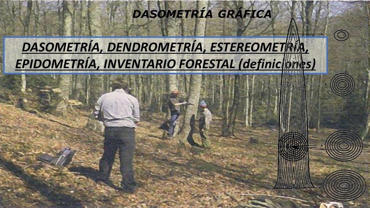 DASOMETRÍA, DENDROMETRÍA, ESTEREOMETRÍA, EPIDOMETRÍA (DEFINICIONES) -  YouTube