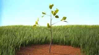 Анимация роста дерева