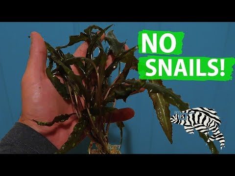 HOW TO: Snail Free Plants!!