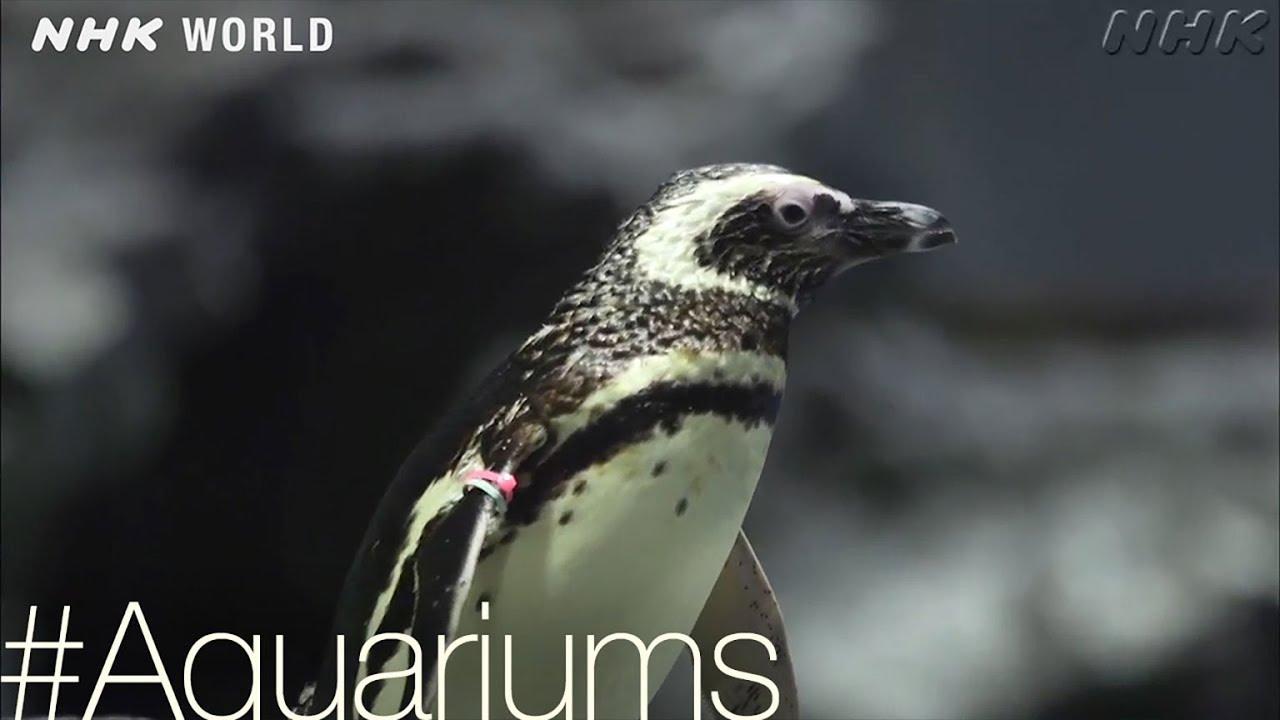 Photo of Penguin Paradise [Aquariums] – #TOKYO [Japan] – video